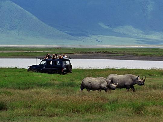 Les rhinocéros du Ngorongoro