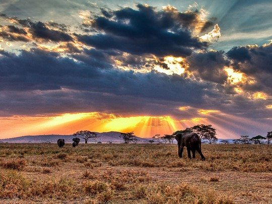 Admirez les éléphants du Serengeti