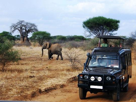 Safari dans le parc national de Tarangire