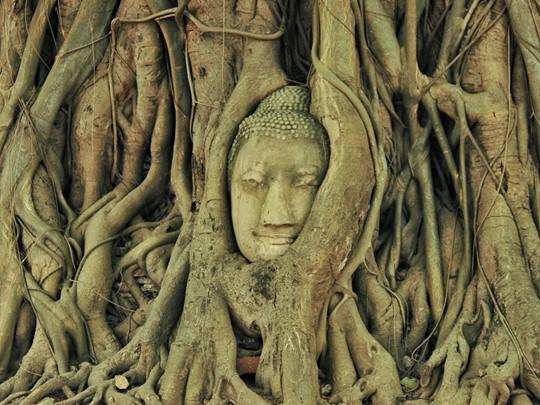Le bouddha dans l'arbre du Wat Mahathat à Ayutthaya