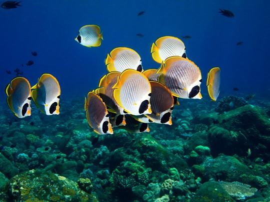 Explorez les fonds marins de Nusa Dua