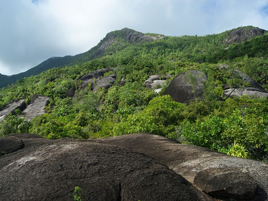 Le parc naturel du Morne Seychellois