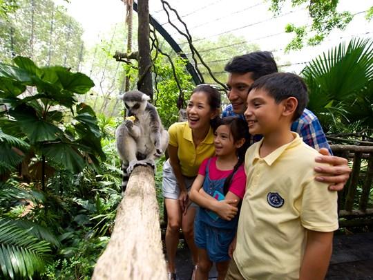 Zoo de Singapour et découvrez la multitude d'animaux qui vagabondent librement dans un parc naturel