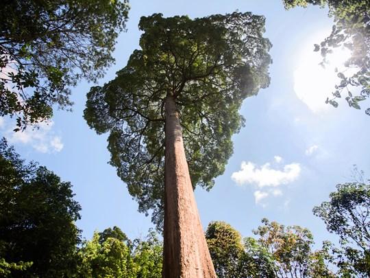 Accompagnés d'un botaniste, qui vous livrera les secrets des plantes tropicales, vous aurez l'occasion de sentir et toucher différentes espèces d'arbres