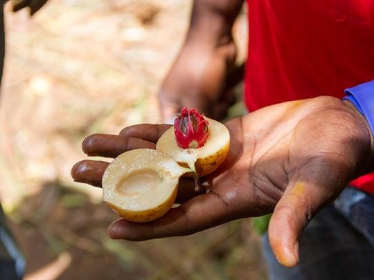 Découvrez la culture de Zanzibar