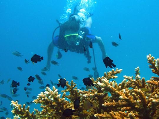 Découvrez les fonds marins de Koh Phi Phi