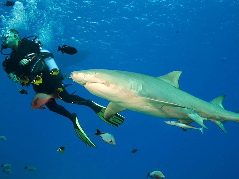 Un séjour à Moorea est l'occasion pour les plongeurs d'explorer les fonds marins polynésiens d'une richesse exceptionnelle