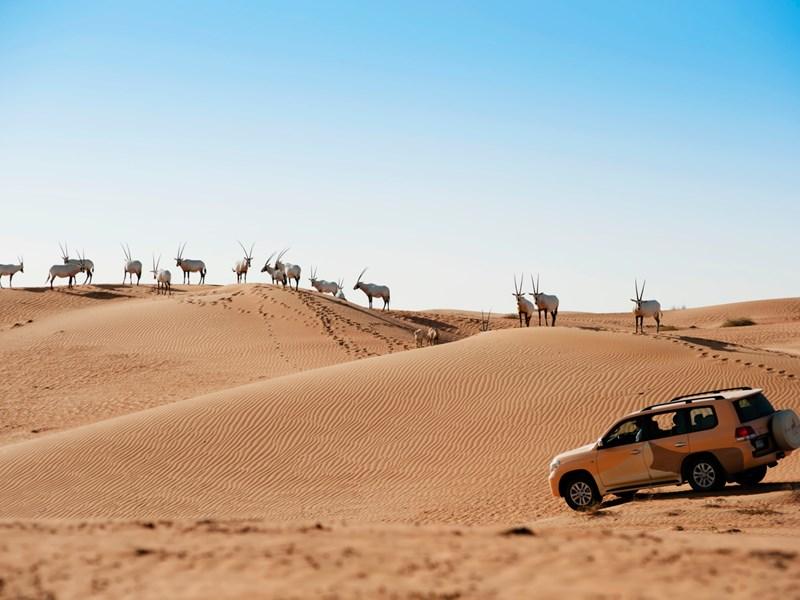 Explorez les dunes