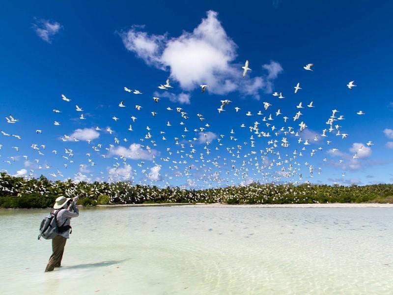 Capturez des moments étonnants à l'Alphonse Island
