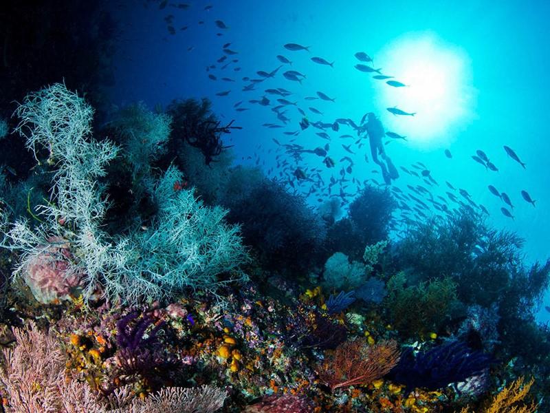 Plongez dans les fonds marins de l'Alphonse Island
