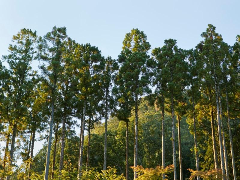 Une végétation dense entoure l'hôtel