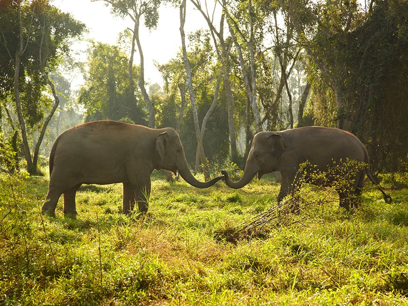 Immersion totale avec les éléphants à l'Anantara Golden Triangle
