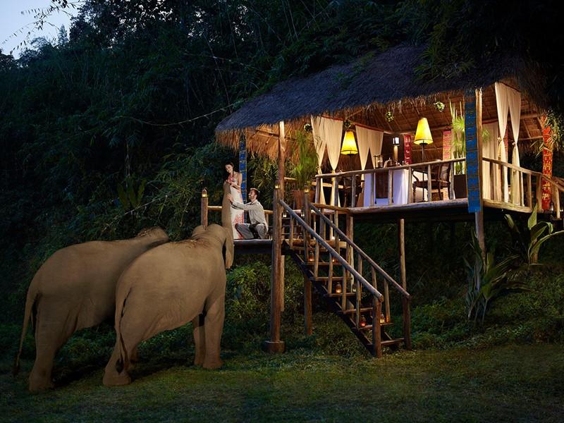 Rencontre avec les éléphants à l'Anantara Golden Triangle
