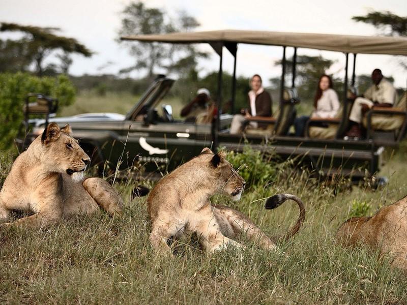 Observez la faune sauvage