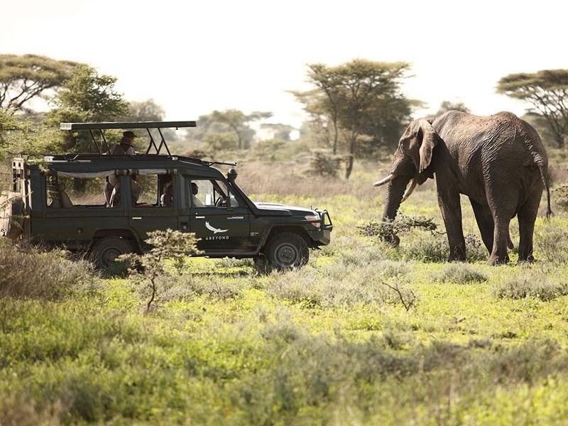 Rencontrez la faune sauvage