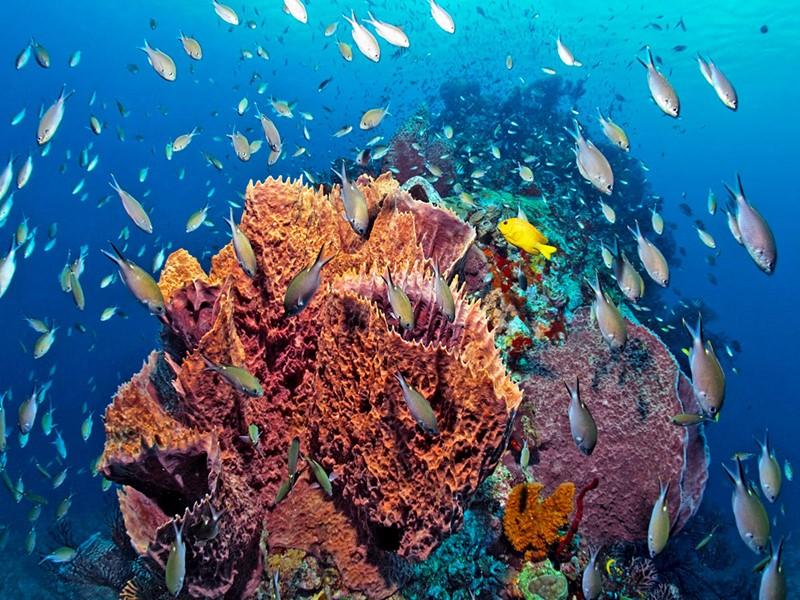 L'Anse Chastanet Resort est un paradis pour les plongeurs