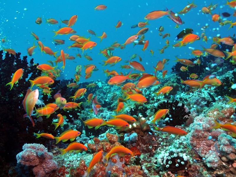 Séjour sur l'Atoll de Raa