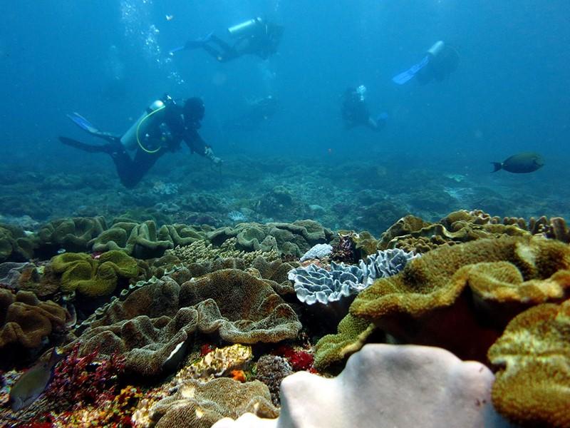 Explorez les fonds marins du Crystal Bay, l'un des seuls endroits au monde où vous pouvez voir les Poisson-lune géants