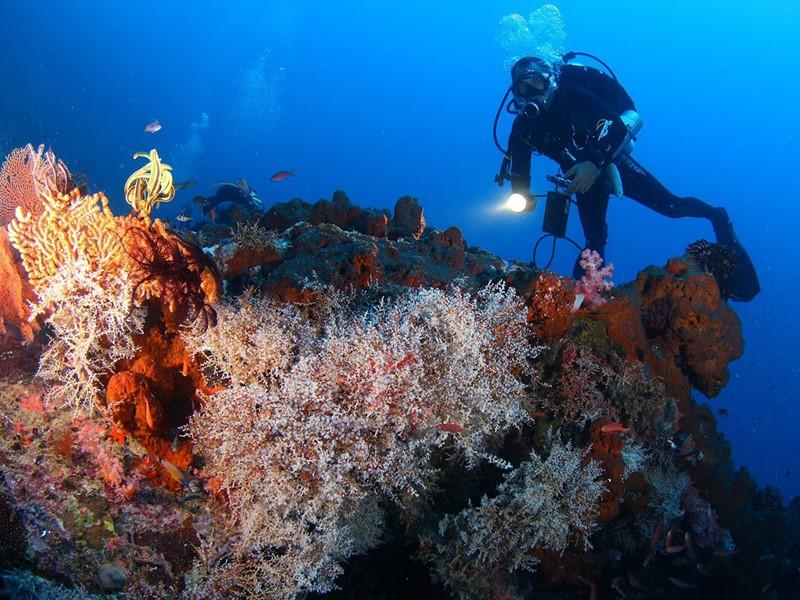 Direction l'île réserve de Menjangan où de magnifiques spots de plongée vous attendent