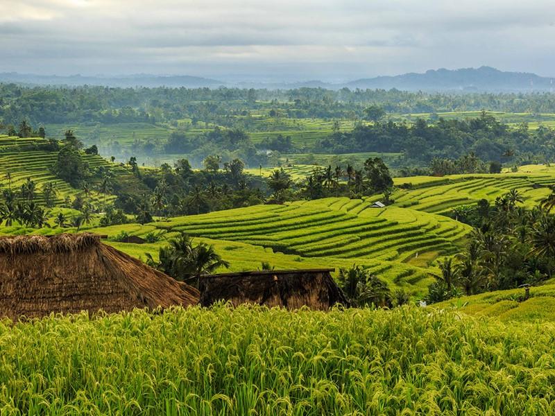 Découverte des célèbres rizières de Jatiluwih, classées par l'UNESCO