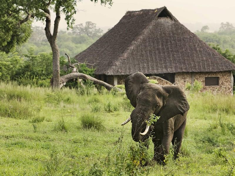 Éléphant dans la réserve de Selous