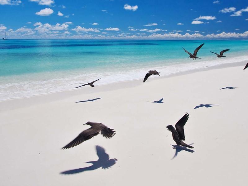 La plage et ses oiseaux