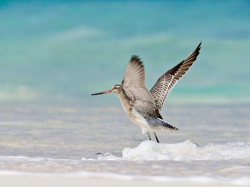 Oiseau sur Bird Island