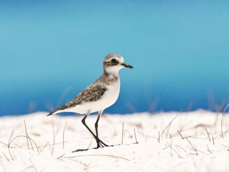Oiseau sur l'île de Bird Island