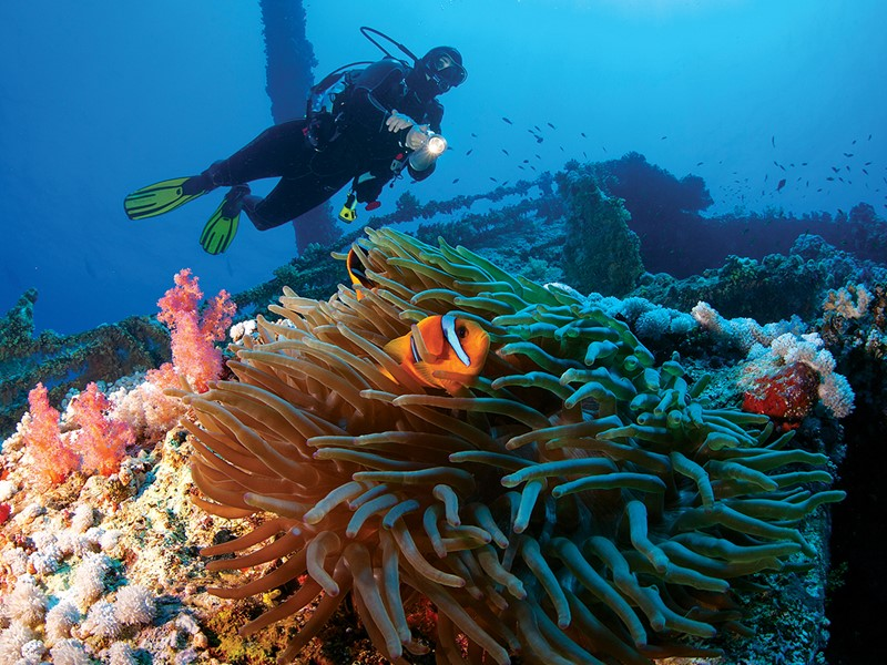 Explorez les exceptionnels fonds marins de Zanzibar