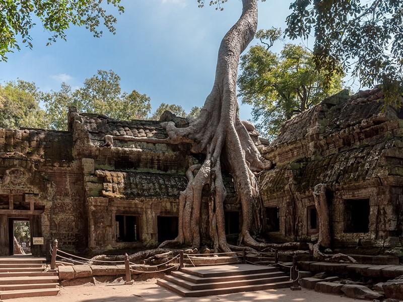 Visite du Temple Ta Prohm à Siem Reap