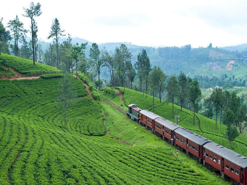Vue des plantations de thé de Ceylan