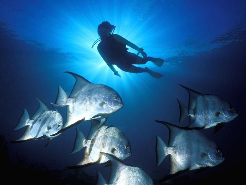 Explorez les exceptionnels fonds marins des Bahamas