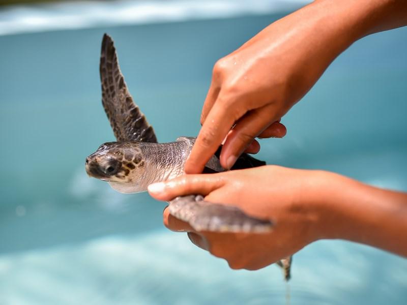 Profitez du centre de soin des tortues. Une expérience inoubliable
