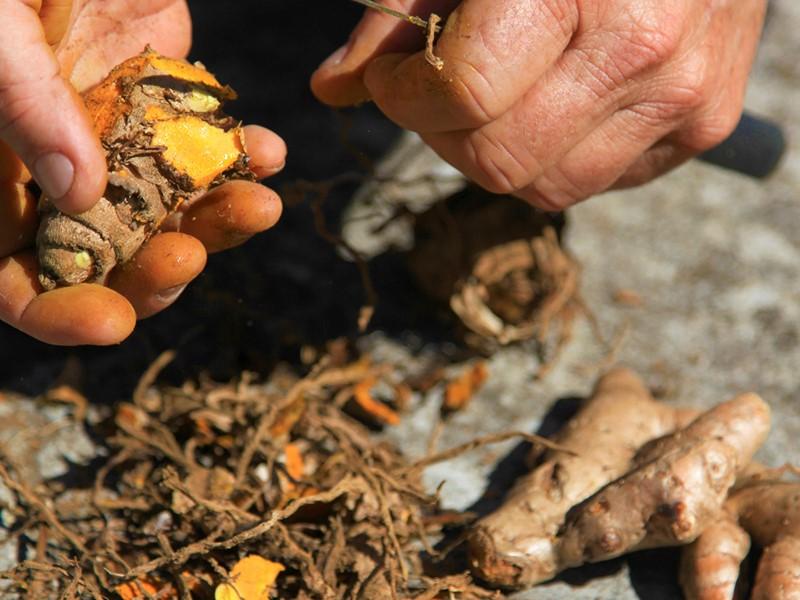 Découvrez les spécialités de la Réunion, et la fabrication du curcuma