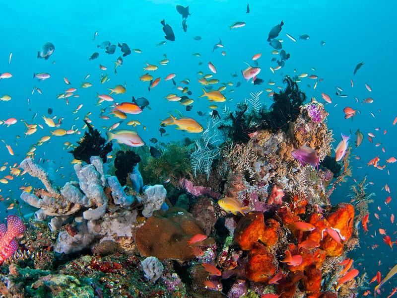 Figurant parmi les plus beaux sites de plongée au monde, le Parc national de Komodo ravira les plongeurs.