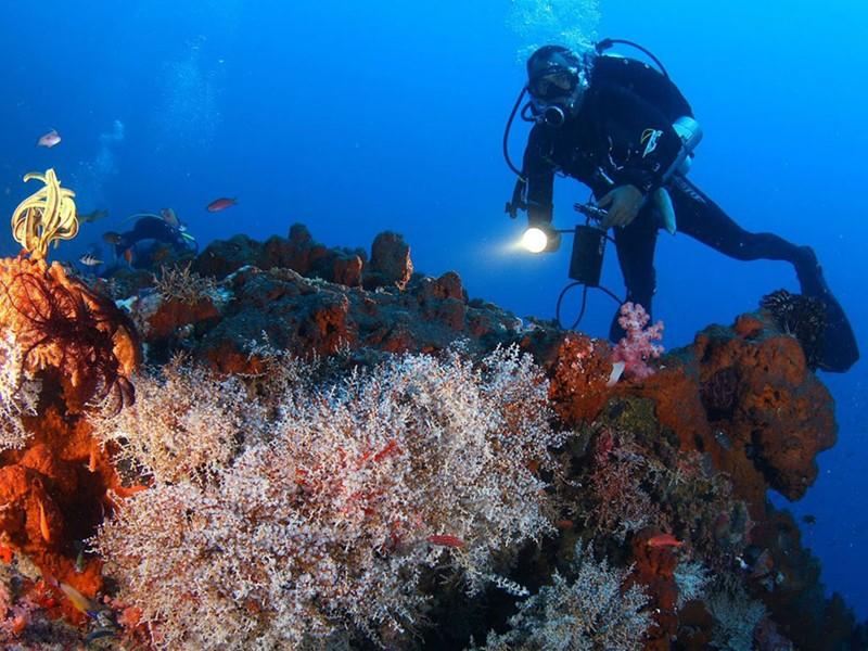 Partez à la découverte de la richesse des fonds marins Indonésiens.