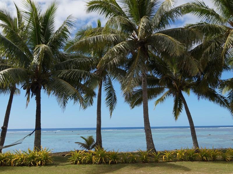 Prélassez-vous sous les cocotiers