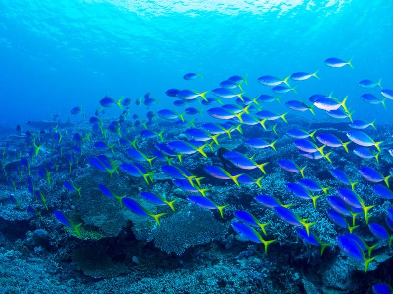 Découvrez les poissons exotiques de l'atoll de Rangiroa