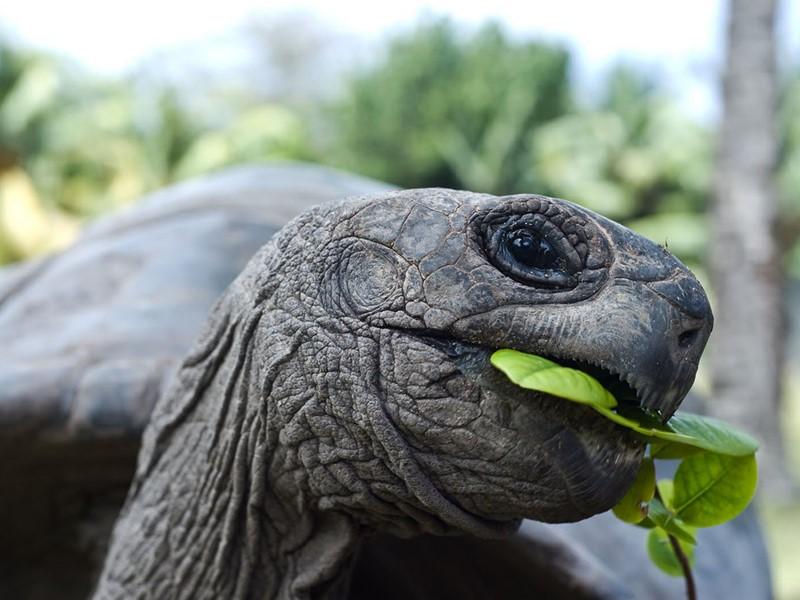 L'île Curieuse, une réserve naturelle de la WWF, est un havre de paix pour les tortues