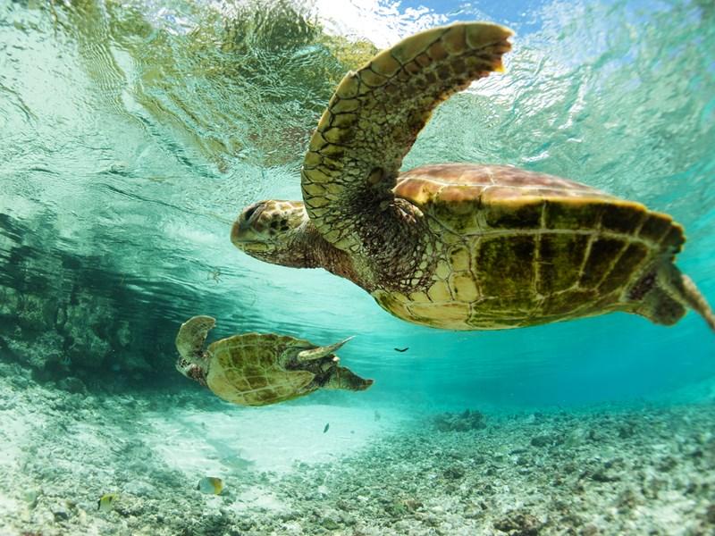 Découvrez la vie sous-marine foisonnante de Bora Bora