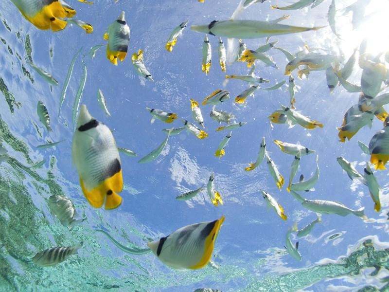 Les fonds marins du Motu Ceran