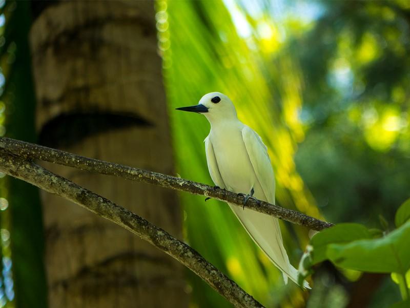 A la rencontre de la faune sauvage au Denis Private Island