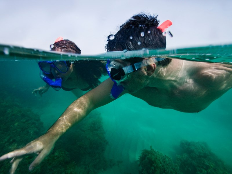 Explorez les fonds marins de Sir Bani Yas Island