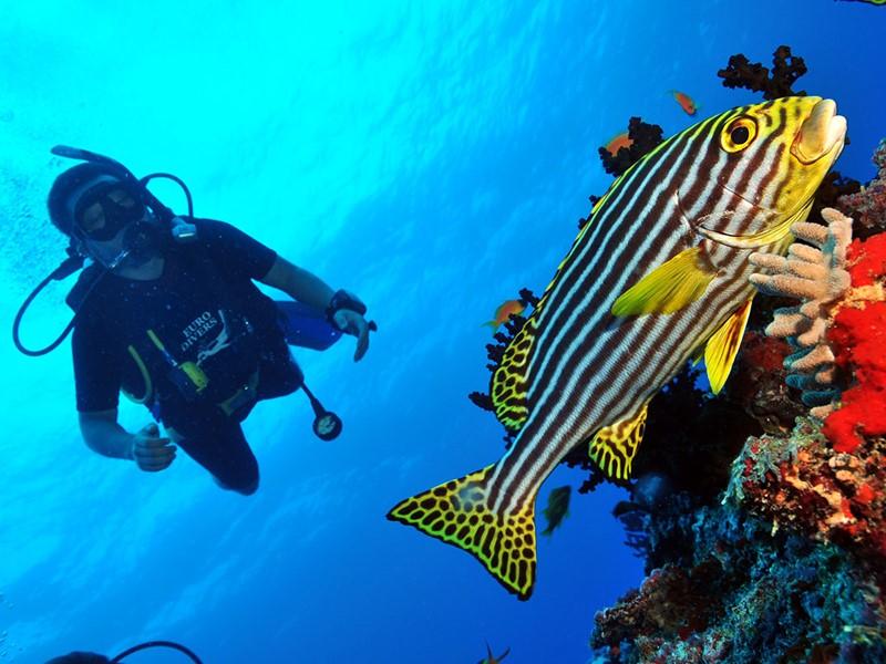 Explorez les exceptionnels fonds marins de l'atoll de Raa