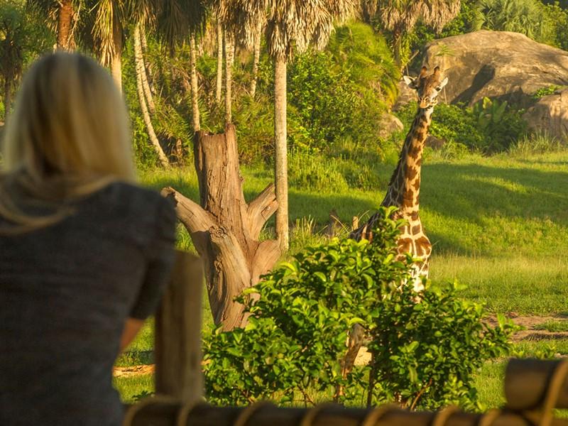 Le Disney's Animal Kingdom abrite de véritables animaux exotiques.