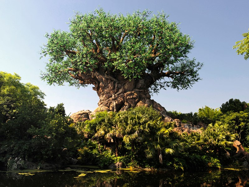 Plongez au coeur de la nature au Disney's Animal Kingdom.