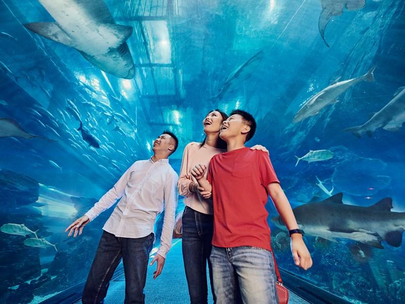 Le magnifique aquarium Lost Chambers