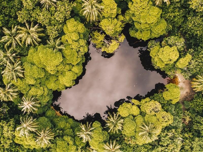 La nature verdoyante des Maldives