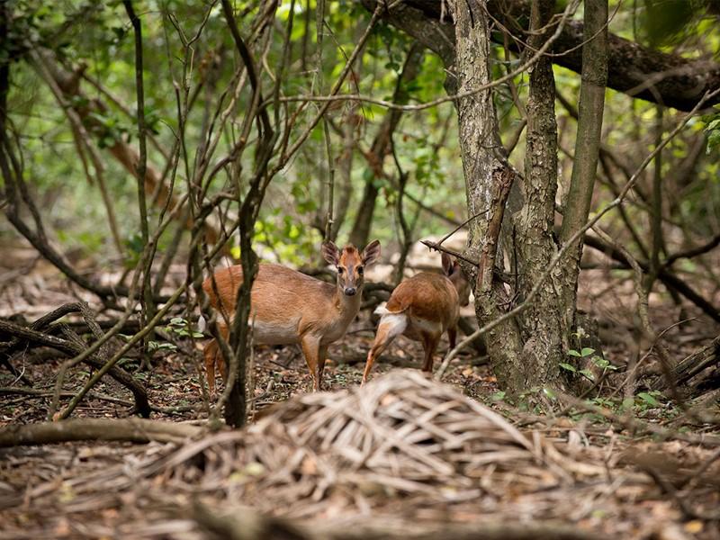 La faune sauvage entourant l'hôtel