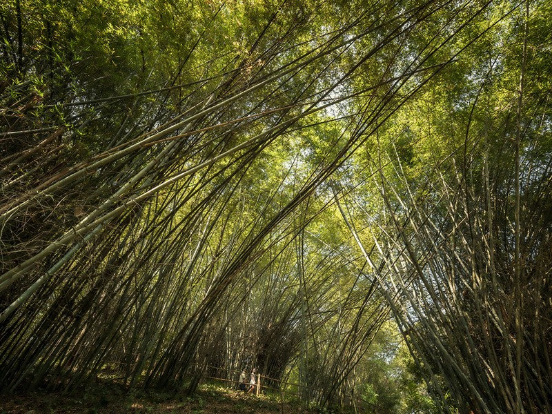 Partez à travers la jungle environnante durant votre séjour au Four Seasons